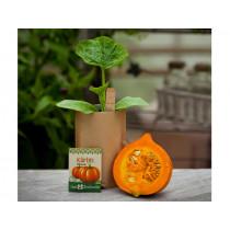 DieStadtgärtner MINI GARDEN Pumpkin